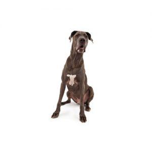 Popular Dog Breeds