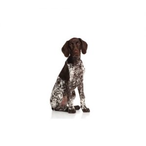 Furry Babies Pointer