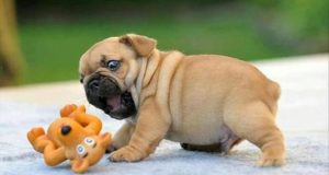 how to potty train your new baby puppies quickly and effectively