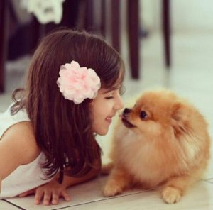 Furry Babies 5 Fun Facts About Pomeranian Puppies