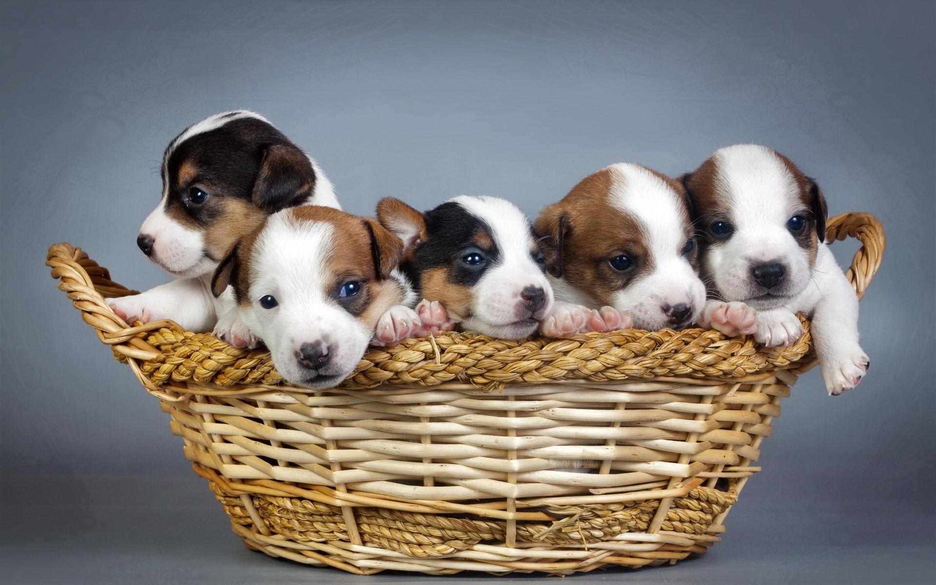 Puppies, Puppies, Puppies Galore!! - Furry Babies