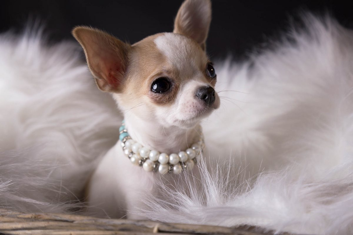 Furry Babies Inc  Blog - Latest News & Information in the