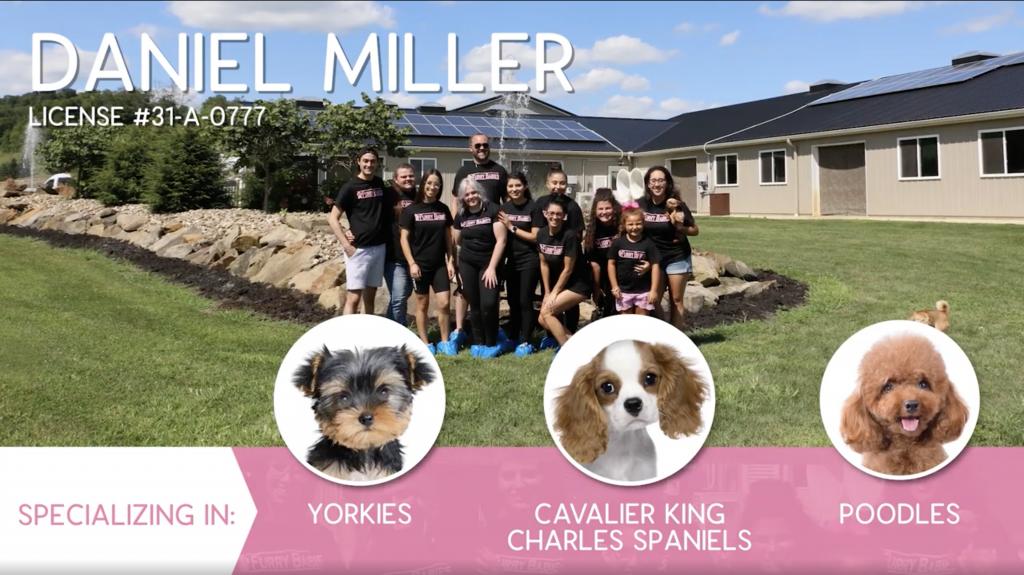 Furry Babies Breeder: Daniel Miller (2020)