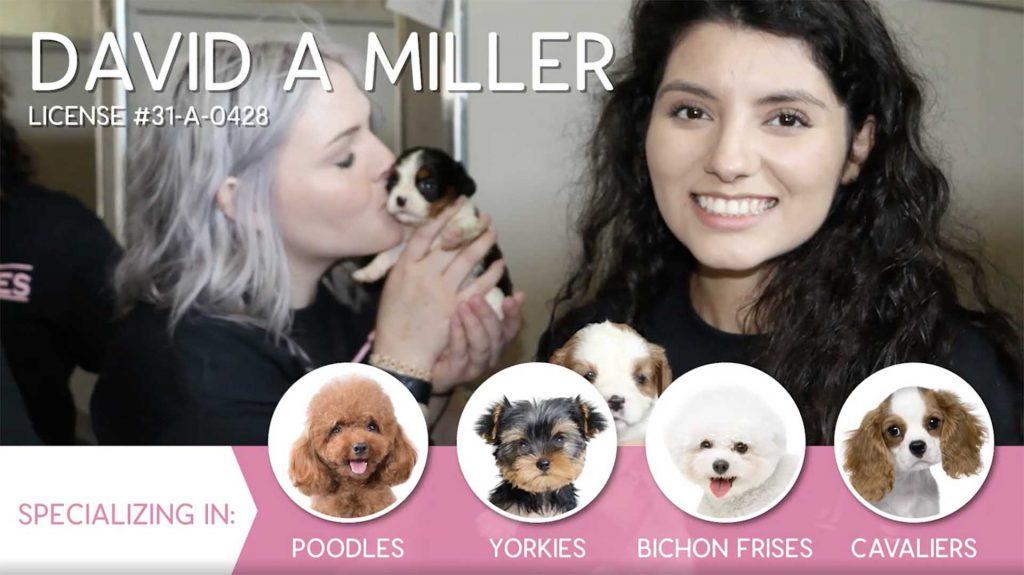 0:20 / 1:47 Furry Babies Breeder: David A Miller