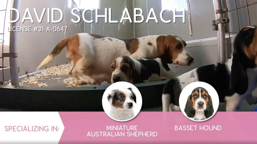 Furry Babies Breeder: David Schlabach (2019)