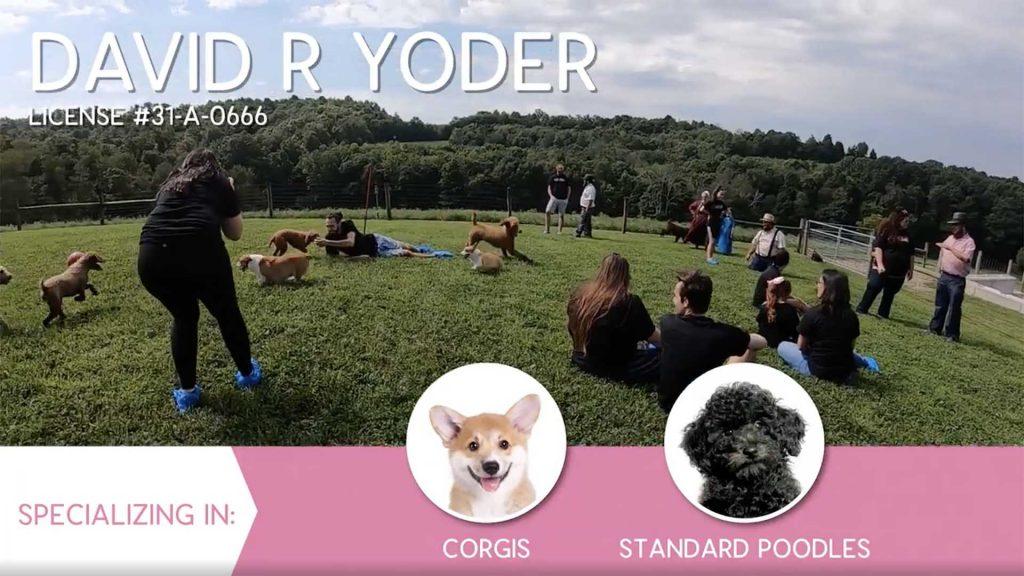 Furry Babies Breeder: David Yoder
