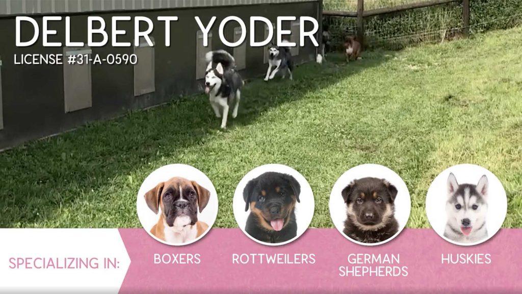 Furry Babies Breeder: Delbert Yoder (2019)