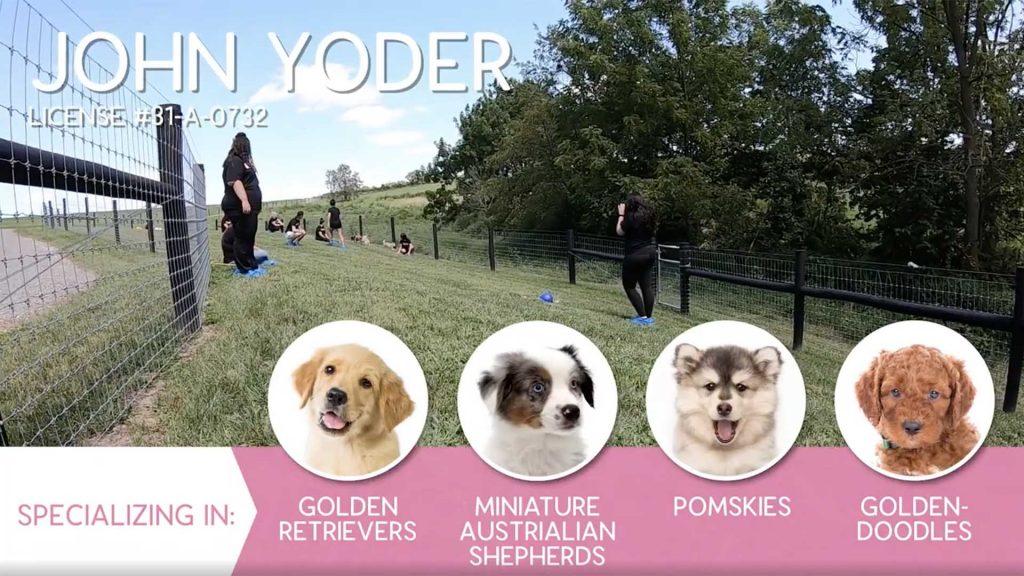 Furry Babies Breeder: John Yoder (2019)