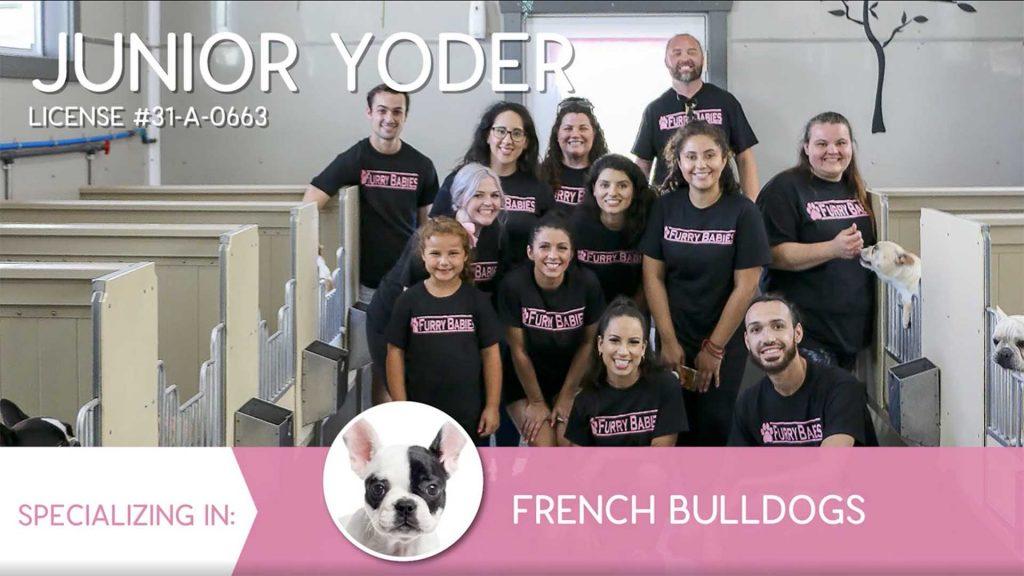 Furry Babies Breeder: Junior Yoder (2019)