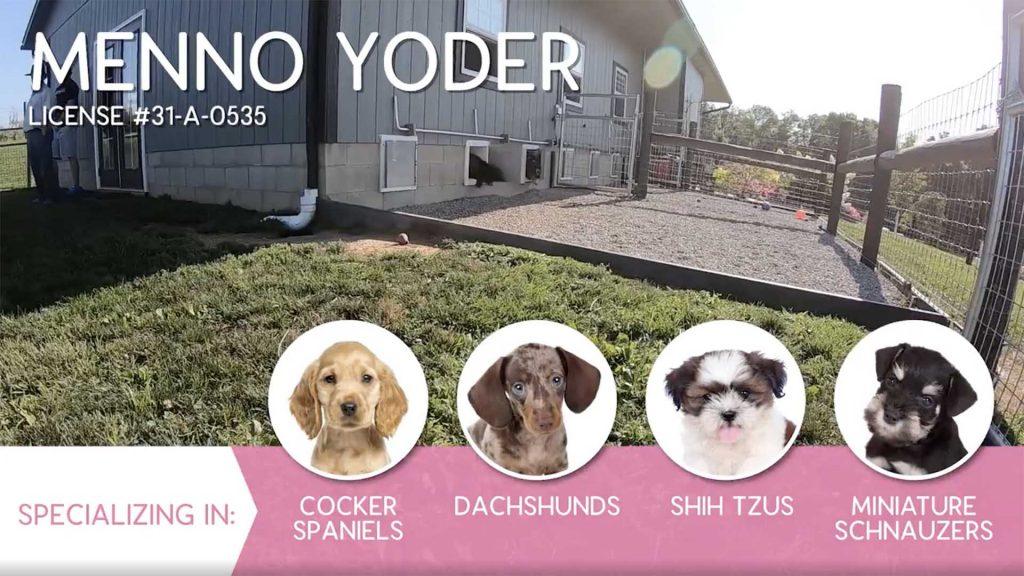 Furry Babies Breeder: Menno Yoder (2019)