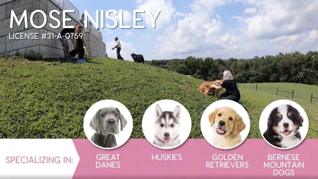 Furry Babies Breeder: Mose Nisley (2019)