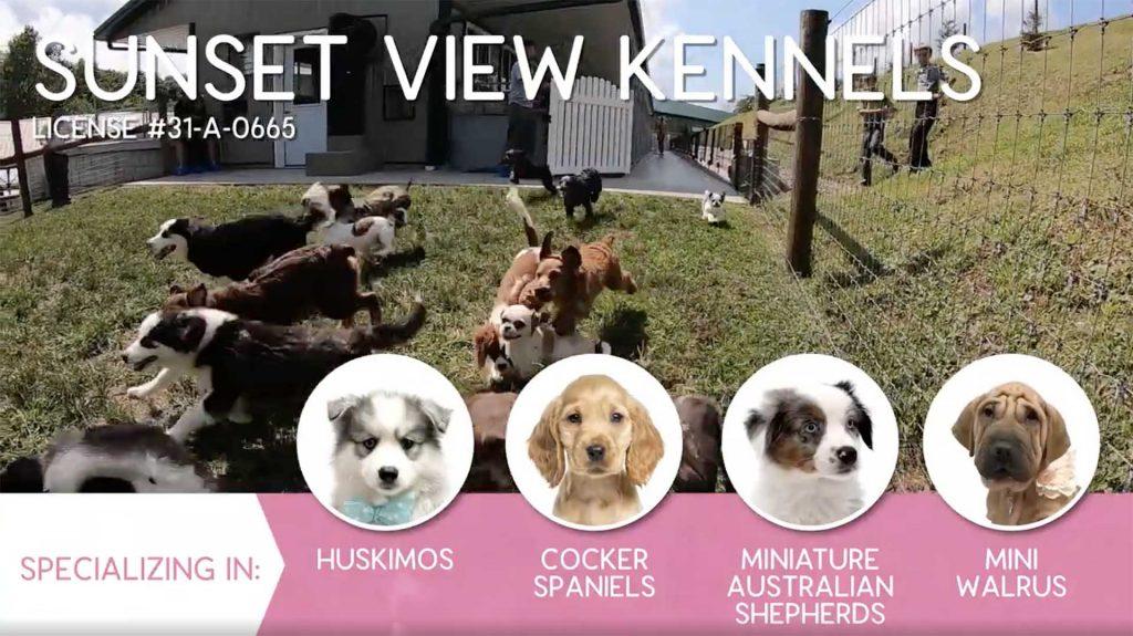 Furry Babies Breeder: Sunset View Kennel (2019)